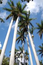 Lastminute Urlaub auf Kuba